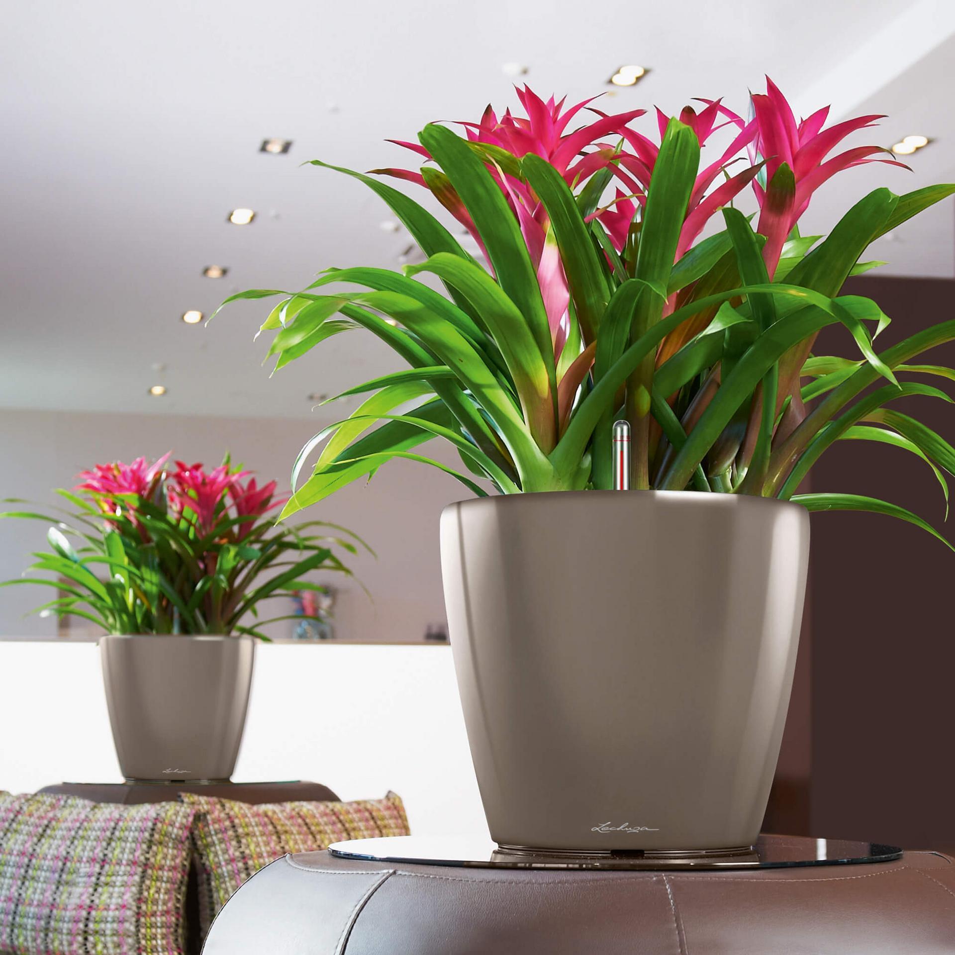 экзотические растения для дома с фото приглашаем вас